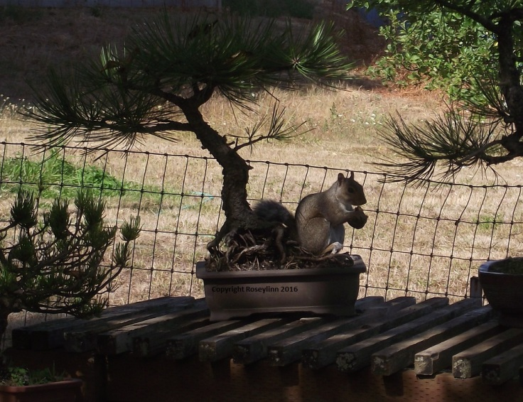Squirrel Perch.JPG